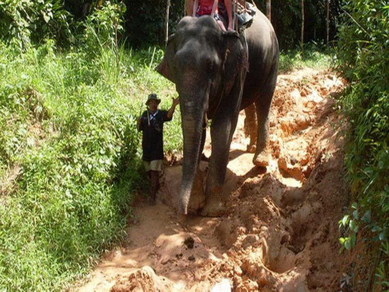 као сок в сезон дождей в таиланде