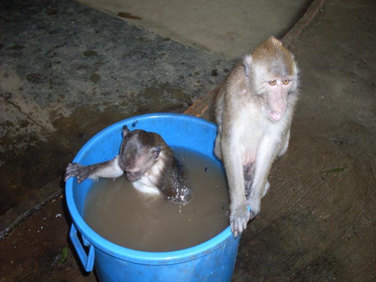поездка в сезон дождей в таиланд